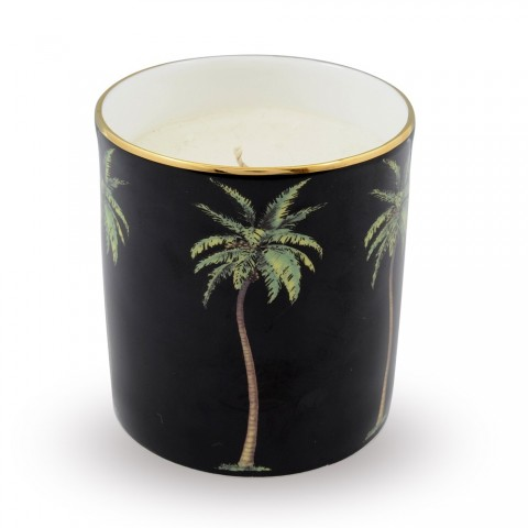 Palm on Black Candle